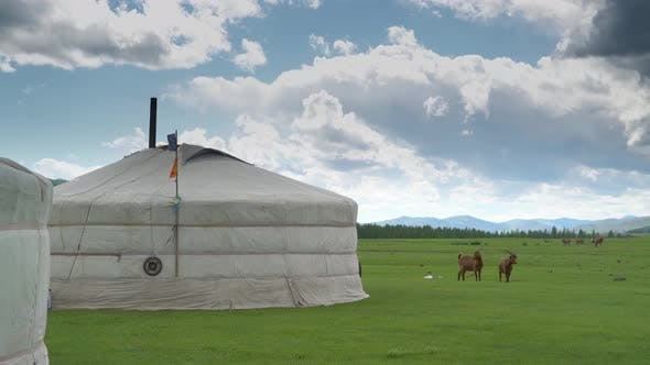 Thumbnail for Mongolian Tents Beside Animals