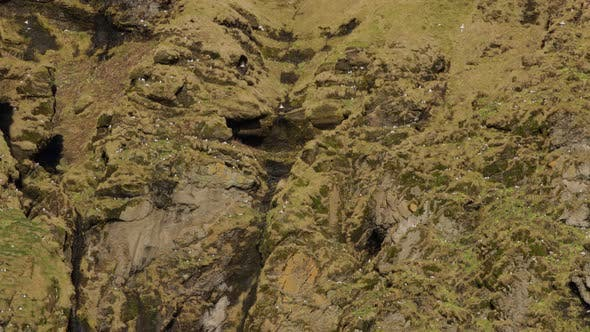 Thumbnail for Thousands of birds fly around rugged cliffs in Iceland