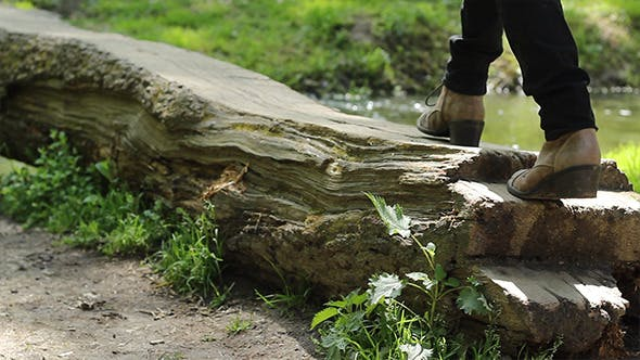Thumbnail for Walking on Tree Bridge