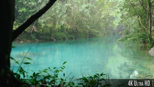 Thumbnail for 4K Still Turquoise Water in a Dense Forest