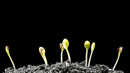 Grows Sprouting Out of Barren Ground