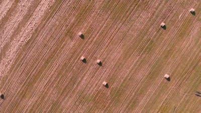 Hay rolls on large wheat field