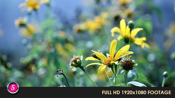 Thumbnail for Flower 6