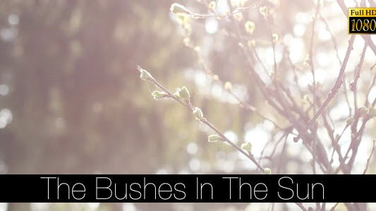 Cover Image for The Bushes In The Sun