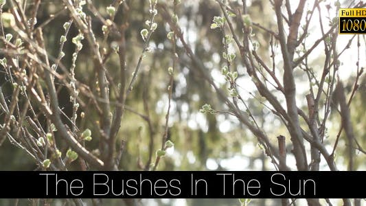 Thumbnail for The Bushes In The Sun 2