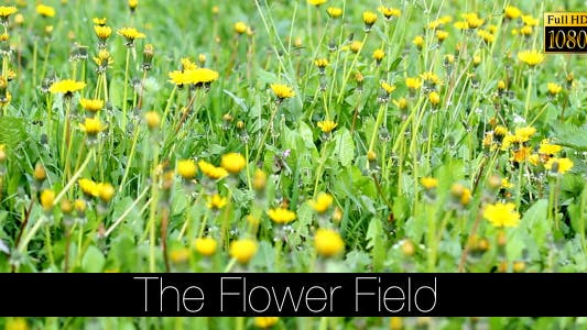 Thumbnail for The Flower Field 9