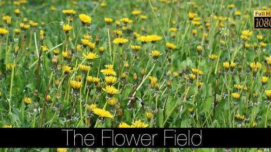 Thumbnail for The Flower Field 11