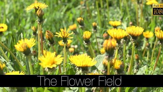 Thumbnail for The Flower Field 14