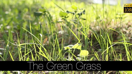 Cover Image for The Green Grass 7