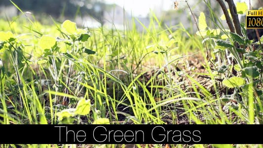 Thumbnail for The Green Grass 8
