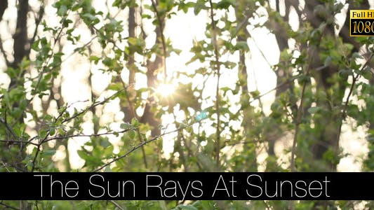 Cover Image for The Sun Rays At Sunset 2