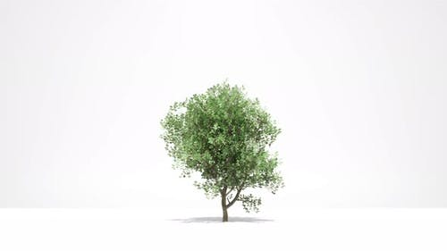 Tree Growth on White New Life Concept