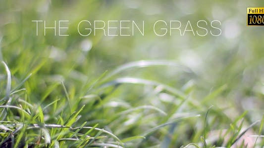 Thumbnail for The Green Grass 9