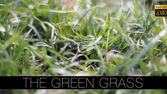 Thumbnail for The Green Grass 10