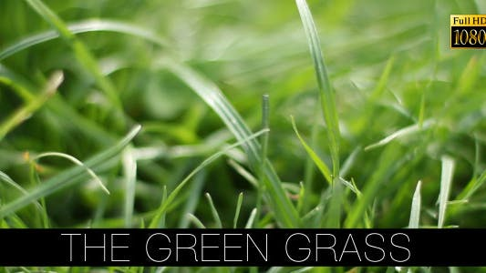 Cover Image for The Green Grass 11
