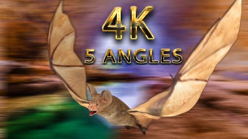 Bat flying from 5 different angles