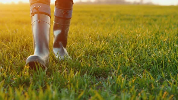 Thumbnail for The Feet of a Farmer in Rubber Boots Are Walking Along a Green Field of Wheat
