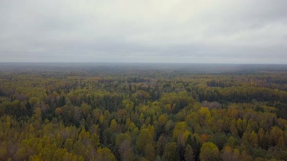 Autumn Forest Road Aerial View