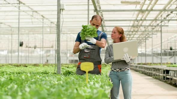 Thumbnail for Agronomy Engineer Using Laptop To Type Data in a Greenhouse