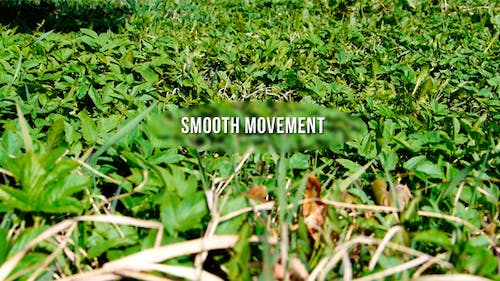Green Grass In Smooth Movement
