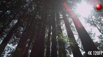 Trees Panorama