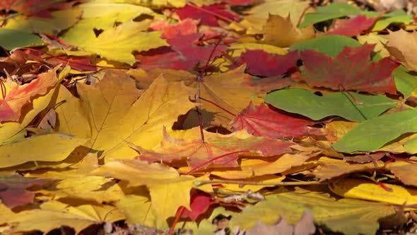 Thumbnail for Background with Autumn Colorful Leaves