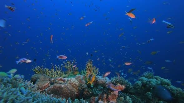 Tropische bunte Unterwasser-Meerlandschaft