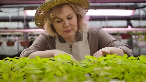 Thumbnail for Close-up Portrait of Senior Caucasian Woman in Straw Hat Checking Growth If Plants in Hothouse