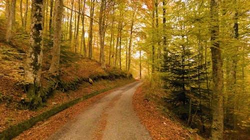 Leaves Street