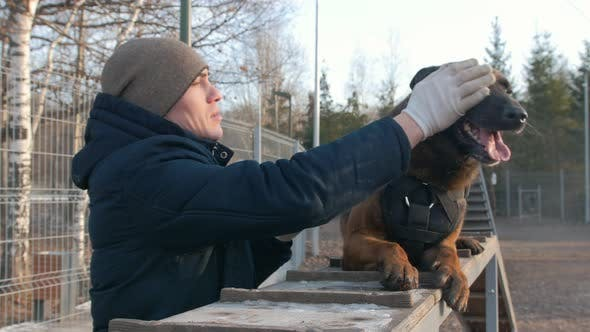 Thumbnail for A Smiling Trainer Petting His German Shepherd Dog Sitting on the Stand