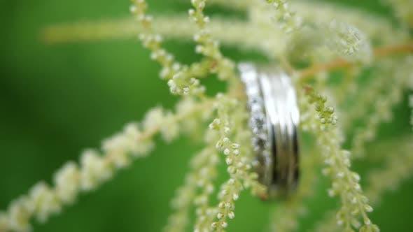 Thumbnail for Silber-Eheringe wiegen auf einer grünen Blume. Schöne Trauringe wiegen auf dem Stiel eines