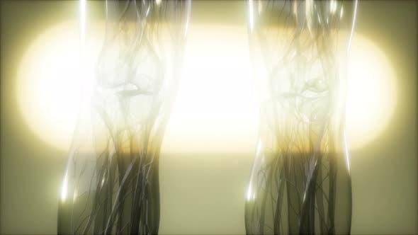 Thumbnail for Röntgenbild des menschlichen Körpers