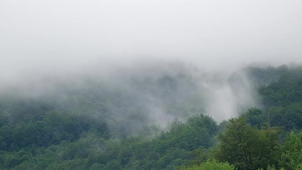 Clouds and Fog After Rain in the Jungle