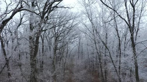 Forest Path in Winter