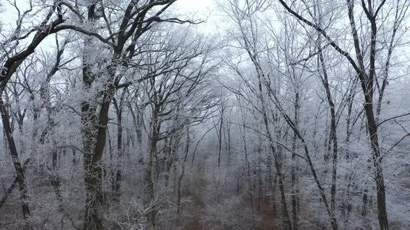 Thumbnail for Forest Path in Winter