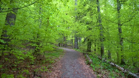 Walking on a Path in the green Forest, Steady Cam Shot. Pov of Hiker