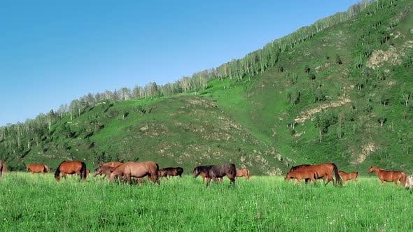 Thumbnail for Horses Graze, Mountains