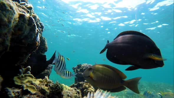 Thumbnail for Colorful Seabed on the Coral Reef in the Caribbean Sea