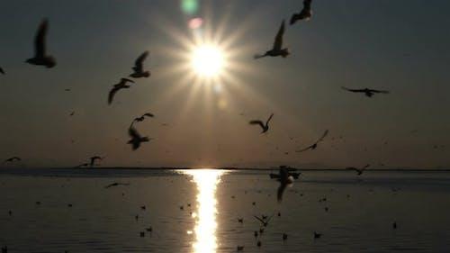 Dunkler Sonnenuntergang Ozean Himmel Und Seevögel-Silhouetten Fliegen