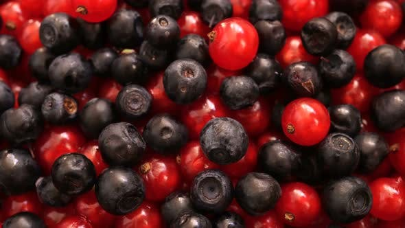 Thumbnail for Rotating Blueberry Ordinary And Red Currant 1.
