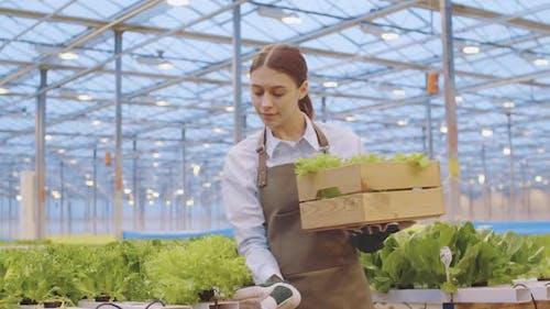 Woman Working in Hothouse