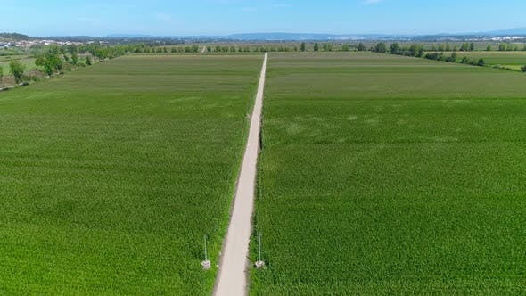 Aerial View of Agriculture and Rural Farming. Top View of the Grain Fields