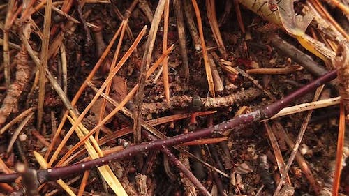 Big Red Ants are Crawling on the Anthill