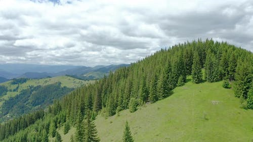 Aerial Drone View of a Lush Mountain Forest.