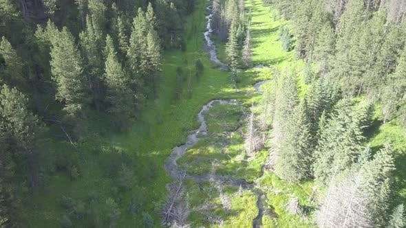 Thumbnail for Beaver in Summer Dam Impoundment in South Dakota United States