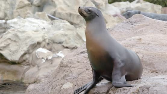 Cover Image for Sea lion lying on the rock