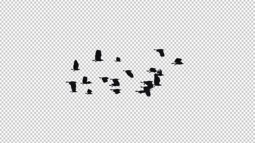 Rabenherde - 22 Vögel - Flying Loop I
