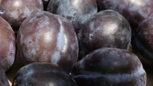 Thumbnail for Purple common plum Prunus domestica after harvest 4K video