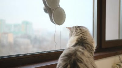 Cat looking to Robot washer. Robot washes the windows of skyscraper.