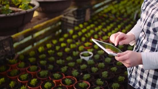 Thumbnail for Gardener Using Digital Tablet in Greenhouse
